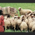 Iran-Nomadic-Sheep-Herder_edited
