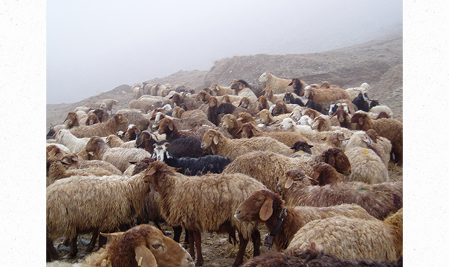 500.8-2.2009イラン46